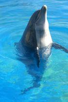 Delfin sagt hallo