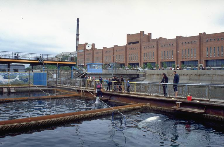 Delfinarium in Vladivostok