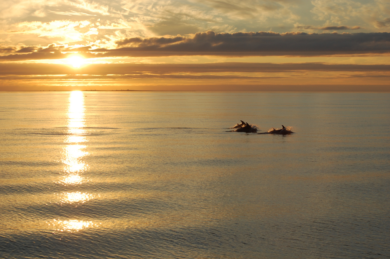 Delfine im Sonnenuntergang