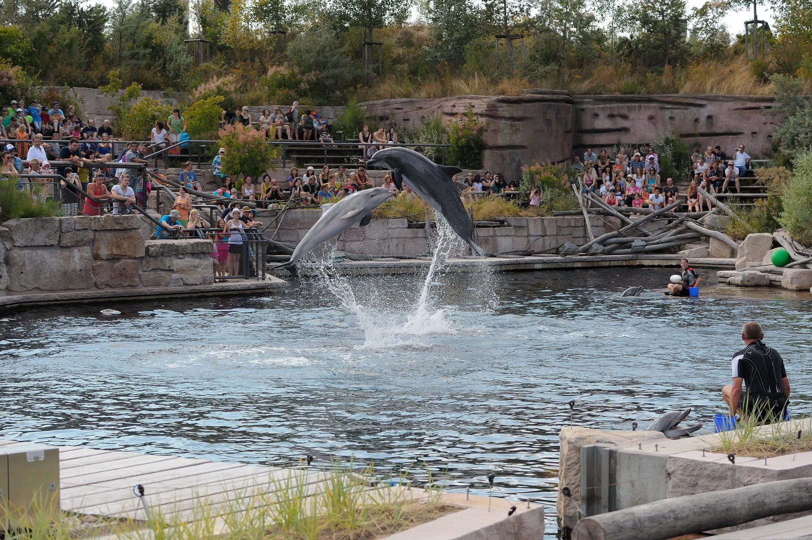 Delfine in Aktion