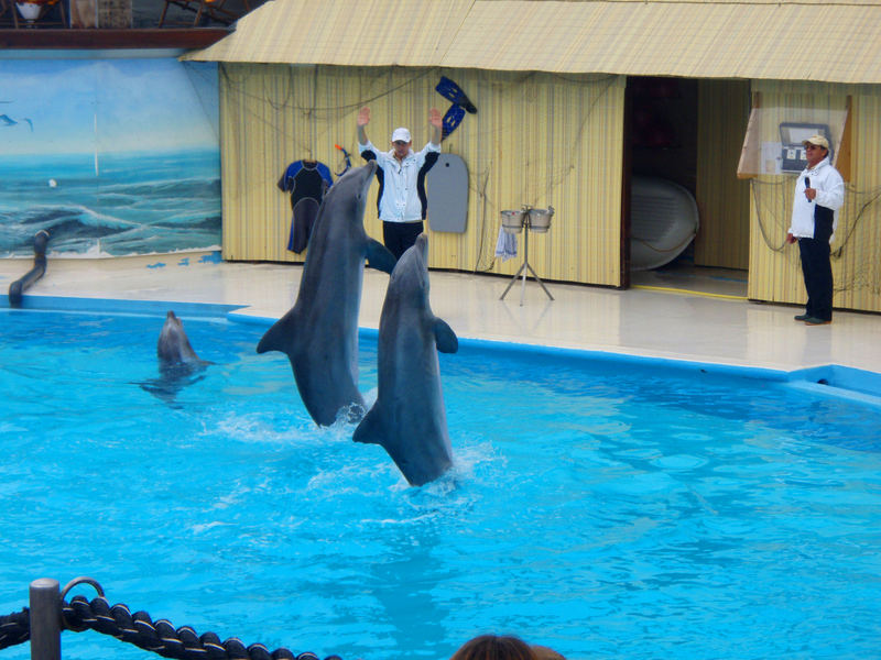 Delfine zum Anfassen..