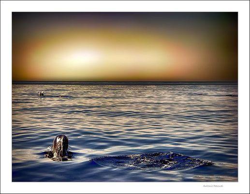 Delfines al amanecer