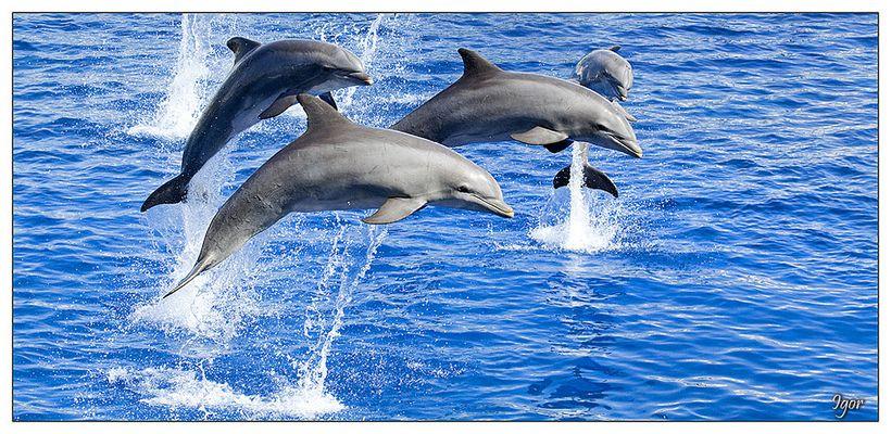 Delfines de L'Oceanografic