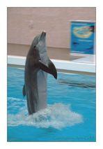 Delfino nell Delfinario di Nürnberg Germania