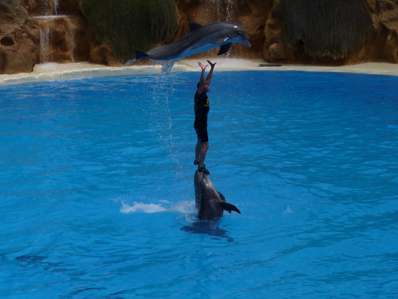 Delfinshow im Loro Park auf Teneriffe