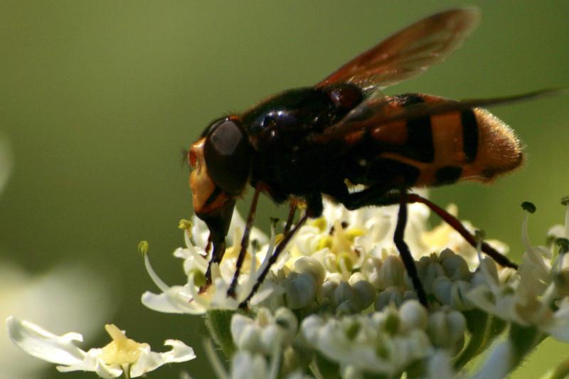 délicieux nectar
