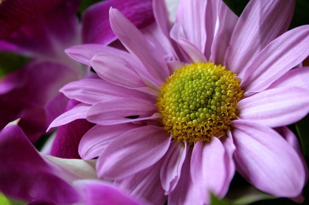 Delizia in fiore
