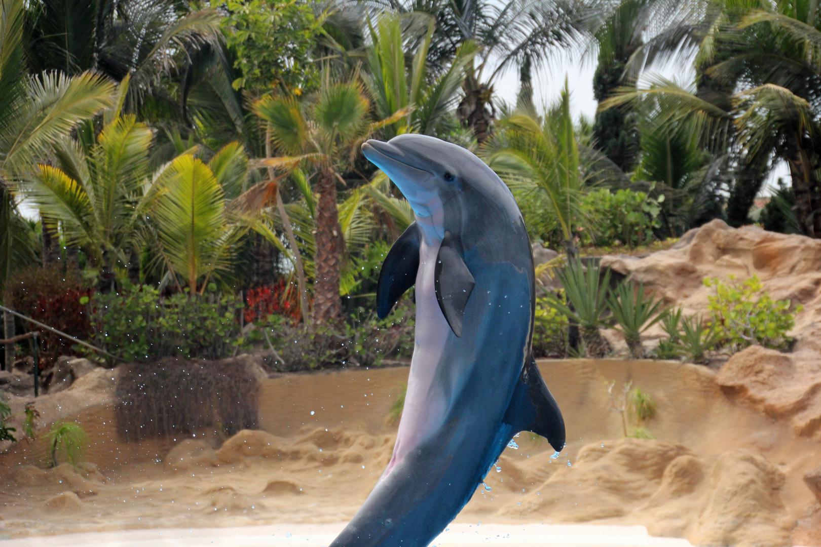 Delphin im Loro Park auf Teneriffa