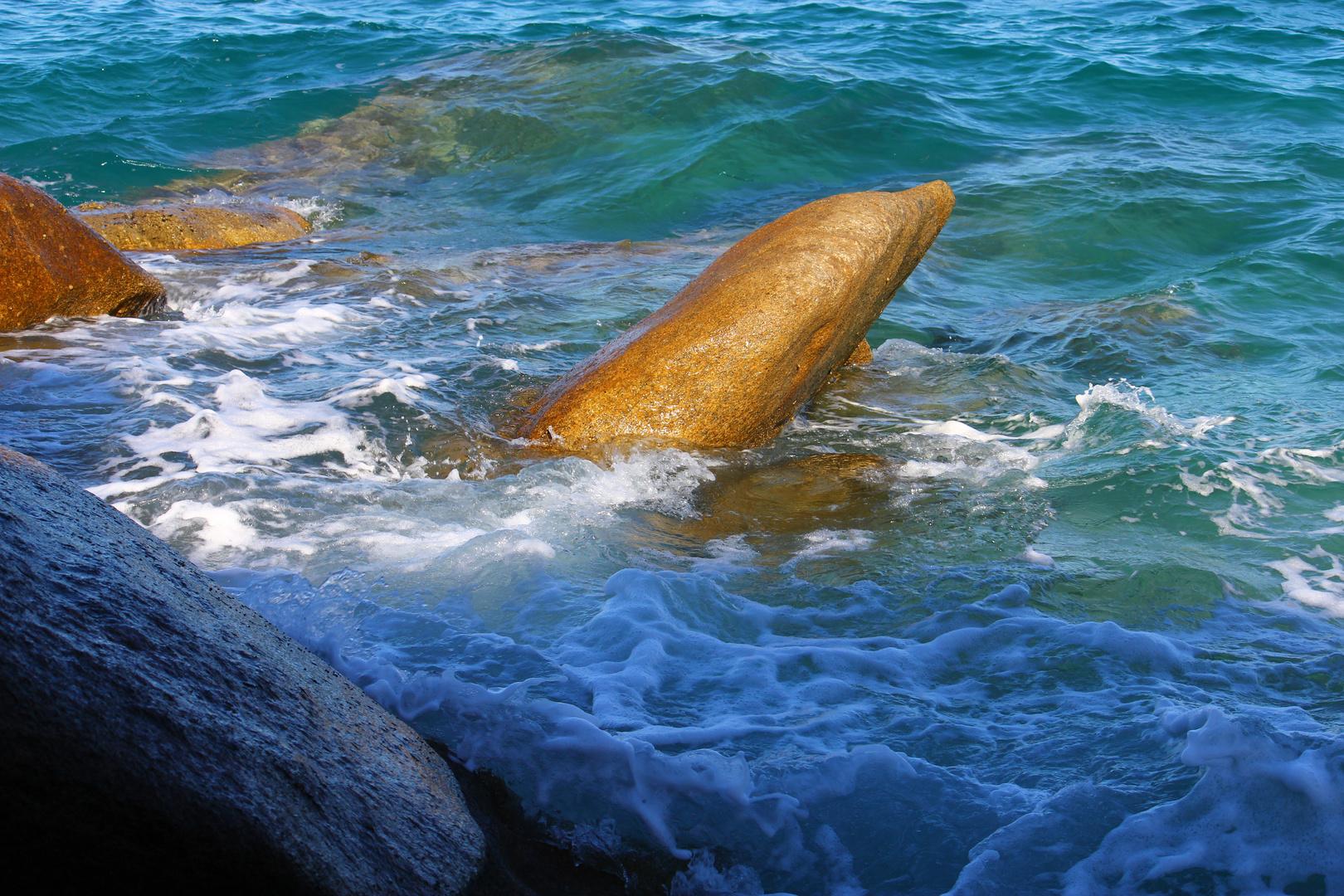 """""""Delphin"""" im Meer"""