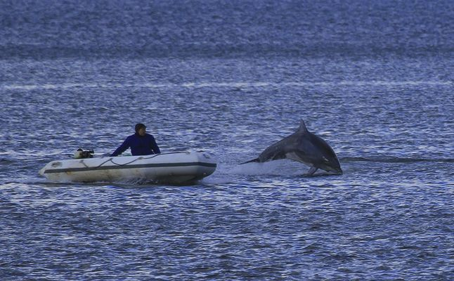 Delphin in Flensburg 1