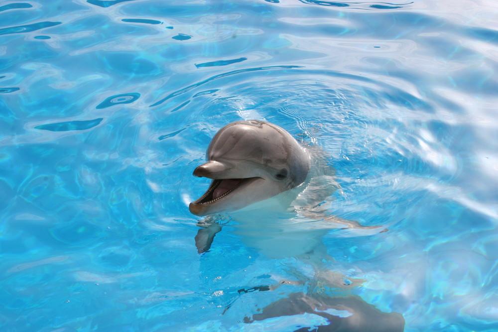 Delphin Kind
