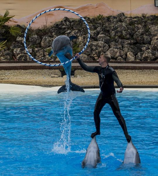 Delphin Show 5