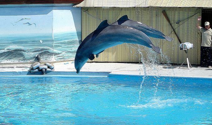 Delphin Show im Heide Park Soltau