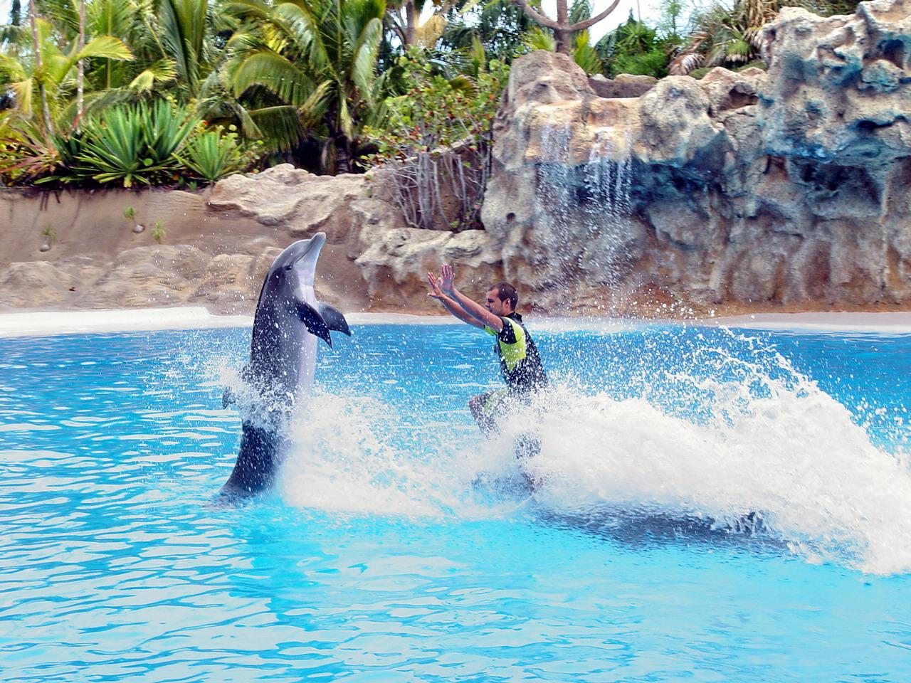Delphin Show im Loro Park