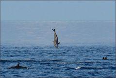 Delphin von oben ...