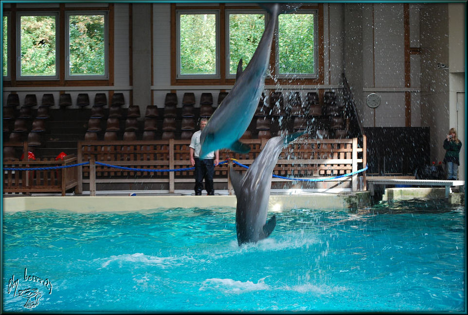 Delphinarium Münster 1