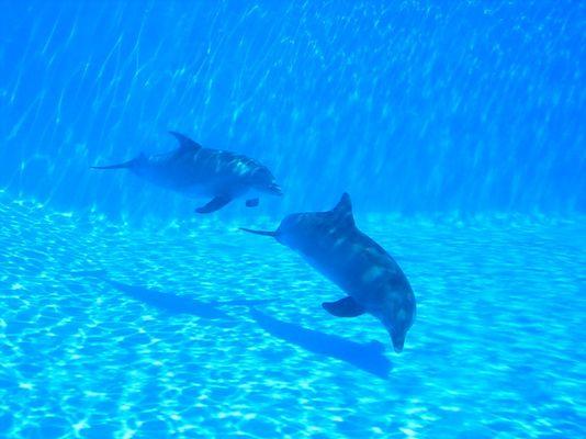 Delphinbecken im Marineland Mallorca