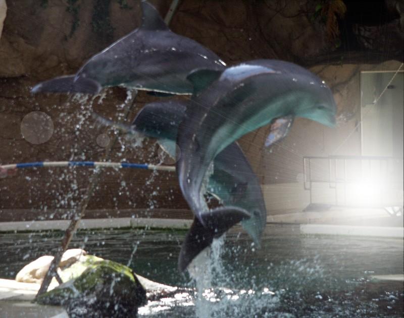 Delphine im Duisburger Delphinarium