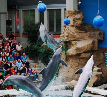Delphine im Duisburger Zoo