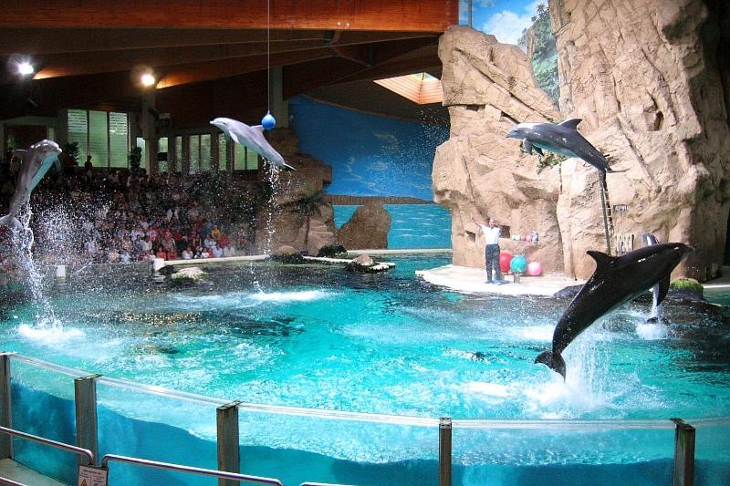 Delphine in Aktion