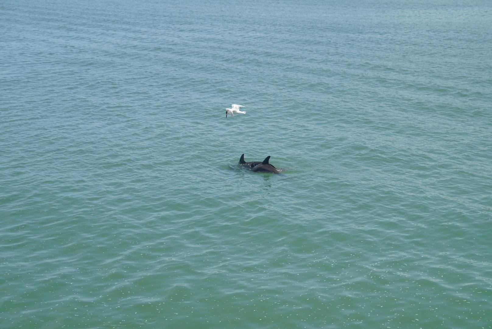 Delphine und Vogel