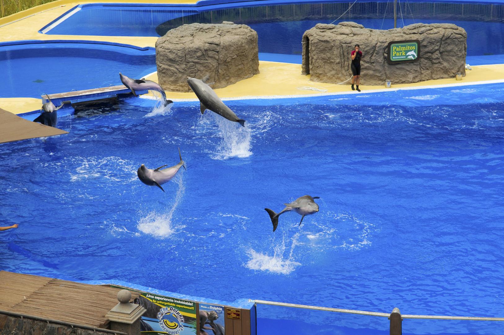 Delphinshow im Palmitos-Park