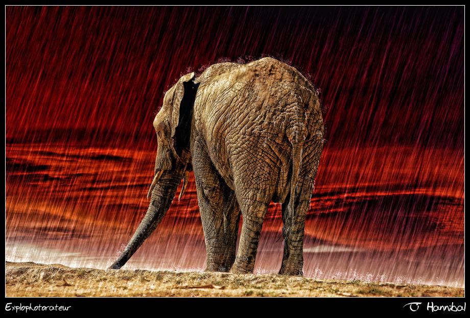 •Deluge•