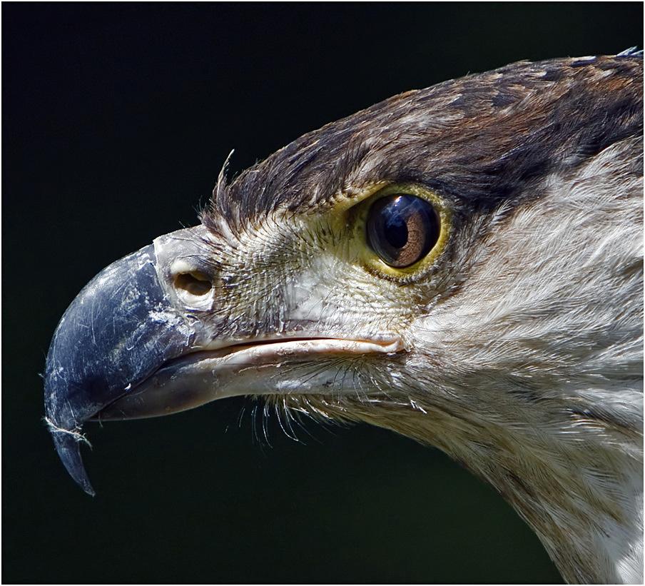 Dem Auge des Adlers ...