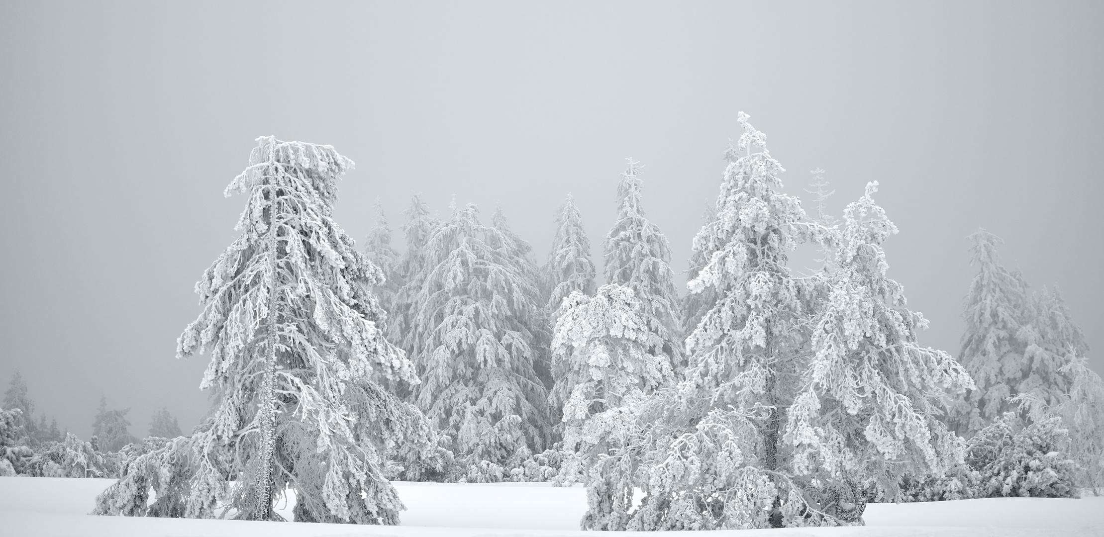 dem Ende des Winters entgegen