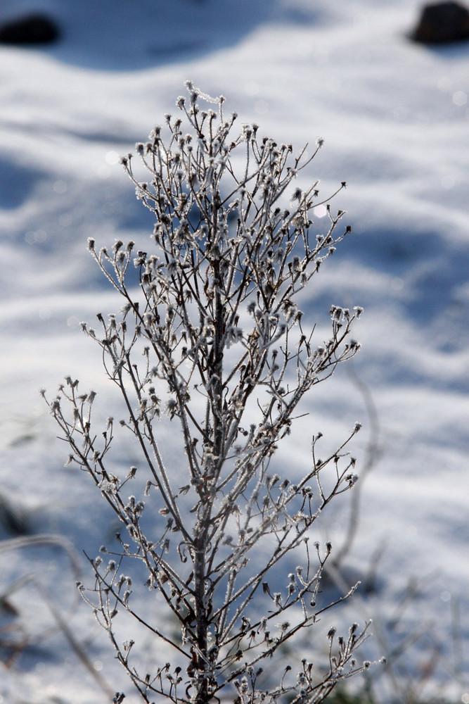 Dem Frost trotzen