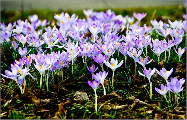 Dem Frühling auf der Spur...