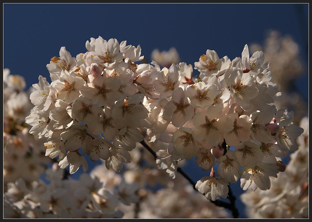 Dem Frühling begegnet...