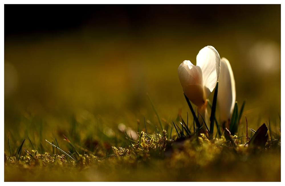 Dem Frühling...