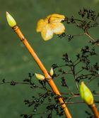 dem Frühling entgegen ...