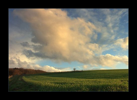 ...dem Frühling entgegen... - oder: ...wo die Feldlerche in den Himmel steigt...