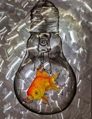 Dem Goldfisch geht ein Licht auf