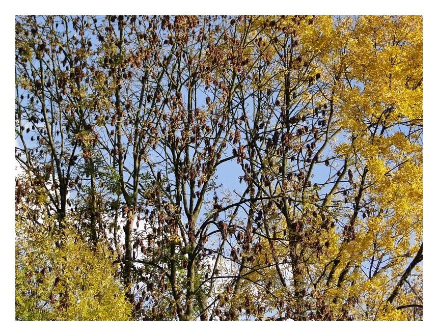 dem Herbst