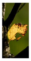/dem Herbst entgegen