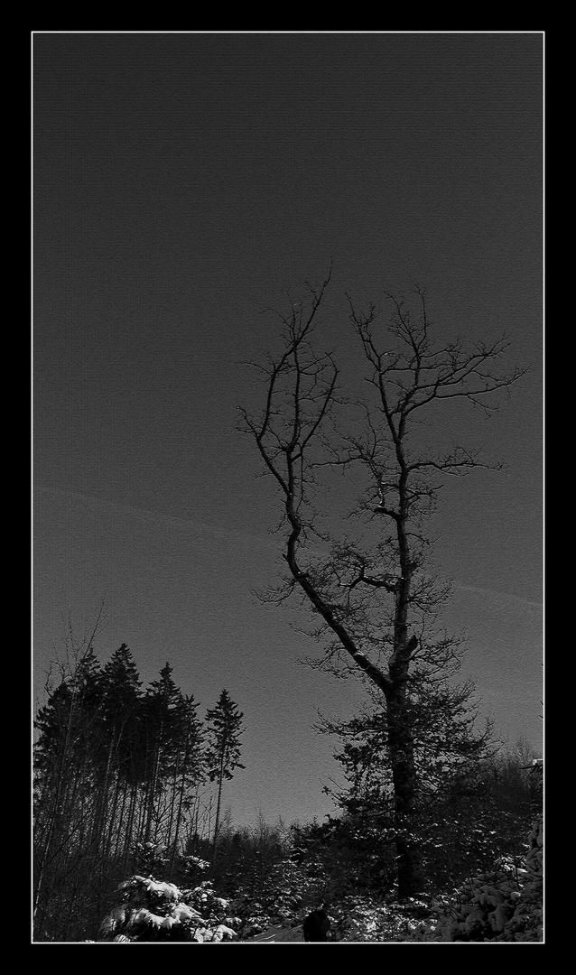 ...dem Himmel entgegen