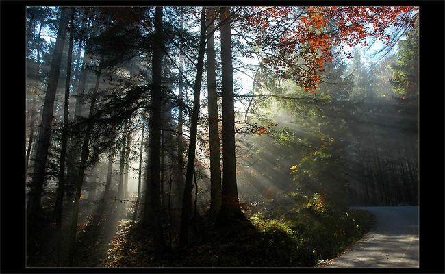 dem Licht entgegen.................