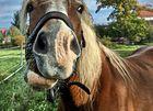 Dem Pferd auf's Maul geschaut