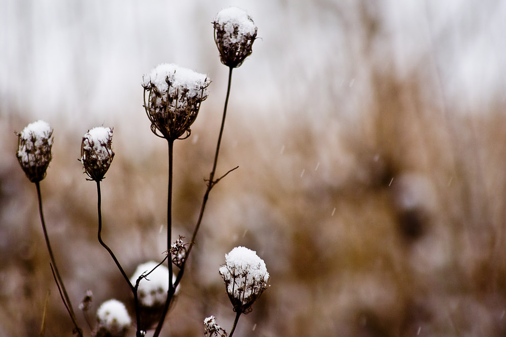 Dem Schnee trotzen...