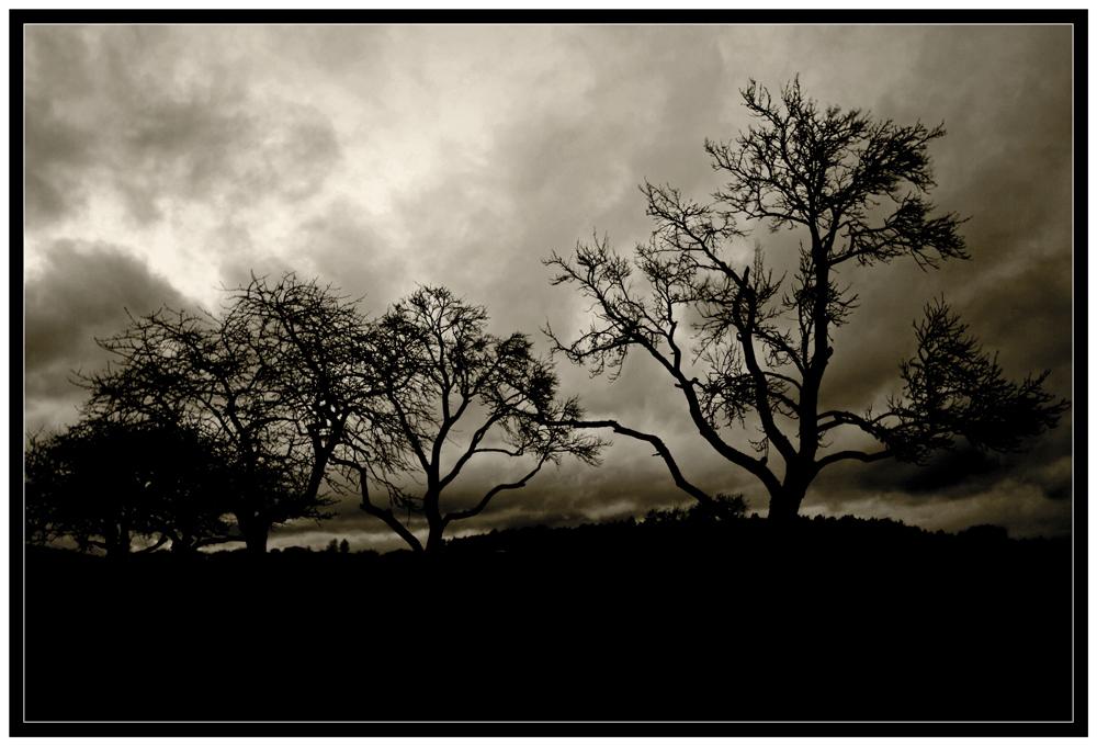 Dem Sturme trotzend ...