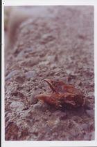 Dem Teufel ich schlug die Rübe ab, auf das er ewig ruht im feuchten Grab.
