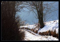 dem Winter entgegen....