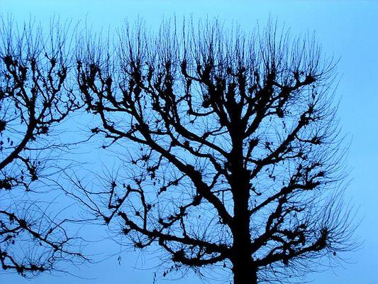 Dem Winter wehrlos ausgeliefert