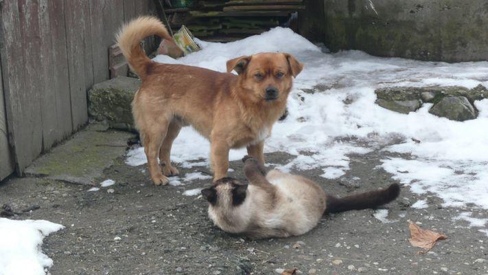 Demi (le chat) et Arsen (le chien)....mes cheres amis :X
