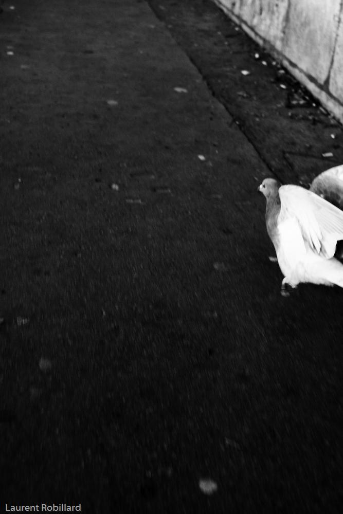 demi pigeon en préparation de carcasse
