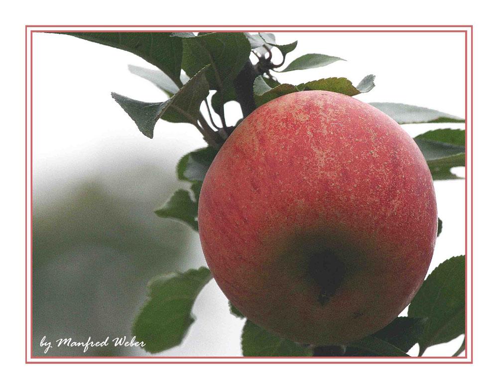 Den Apfel aus Nachbars Garten …