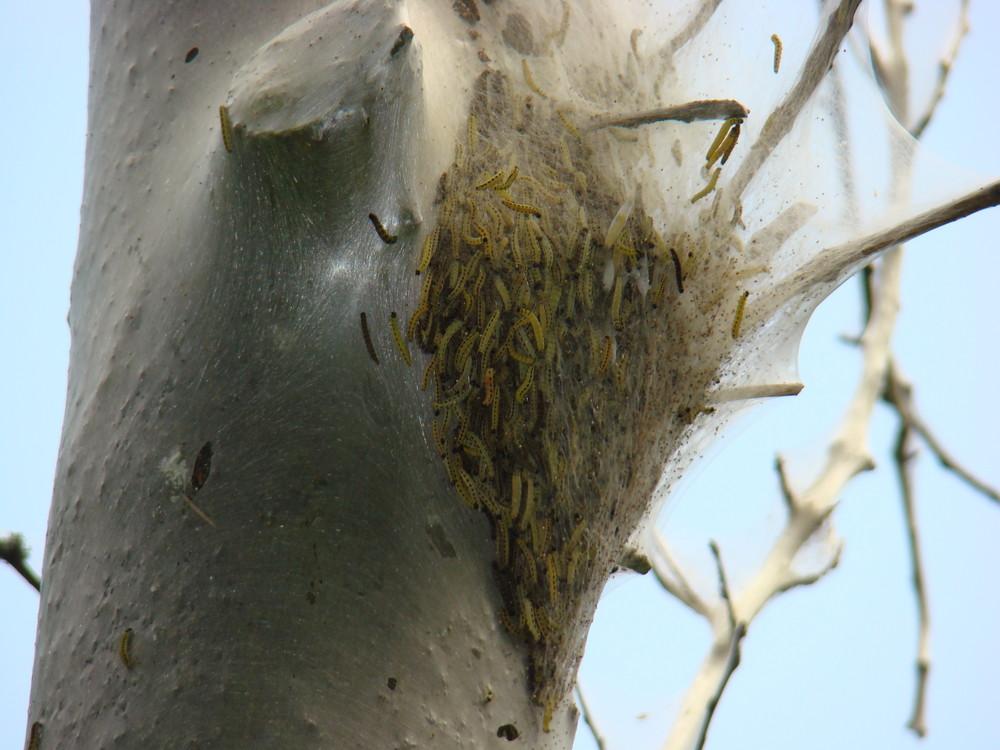 Den Baum fest im Griff